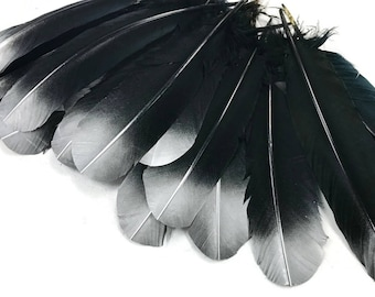 Eagle Feathers, 6 Pieces - Silver Metallic Spray Paint Tip Tom Turkey Rounds Imitation Eagle Secondary Feathers : 4172