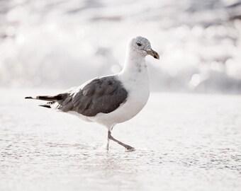 "Black and White Seagull Photography, bird beach print grey light gray pale wall art coastal picture neutral ocean photograph, ""Beach Walker"""