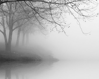 black and white photography,landscape photography, nature photography, trees in fog, tree photography, winter landscape photography