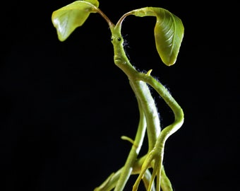Pickett the Bowtruckle - Handmade figurine made of polymer clay