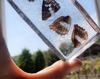 Full set of wings set in glitter resin
