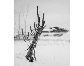 Winter scenery print // fine art print