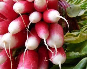 Radish - French Breakfast - Heirloom - 30 Seeds