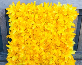 Spring Flower Backdrop, photo shoot prob, flower decor for weddings and events