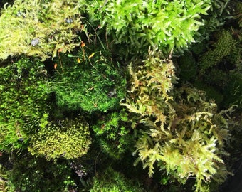 A selection of live moss for terrariums