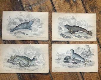 c. 1833 ANTIQUE SEAL PRINTS - original antique sea life prints- Jardine seal prints - marine mammals - set of 4 hand colored engravings