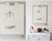 Vintage German educational poster, pull down chart, native insects school map, zoological wallchart, biology educational chart, insects
