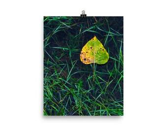 Leaf Underwater