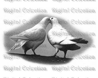Wedding Doves Transparent Image. Wedding Doves PNG. Wedding Doves PNG. Wedding Dove Images. Wedding Dove Clipart. Wedding Scrapbook. No 0151