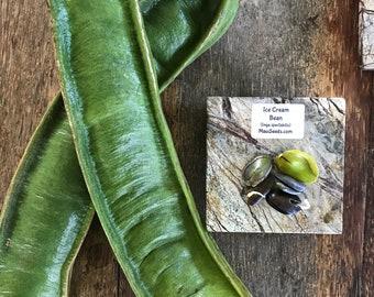 Ice Cream Bean Tree/Maui Seeds/Inga Spectabilis/Ice Cream Bean Tree Seeds/Fruit Seeds/Organic Seeds/Maui Fruit/Hawaii Fruit Seeds/Tree Seeds
