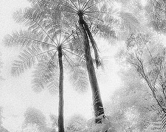Fern Tree, Rainforest, Puerto Rico, USA