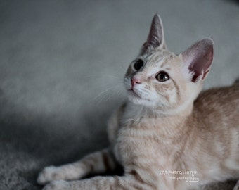 Look to the Heavens - Cat Print - Cat Photography - Cat Photo - Animal Photos - Gift for Cat Lovers
