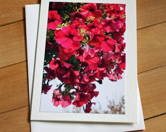 Petunia Greeting Card, Blank Greeting Card, Note Card, Any Occasion, Mother's Day, Envelope, Photography, Photograph, Floral Card, Flowers