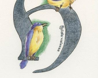 Avian Alphabet H