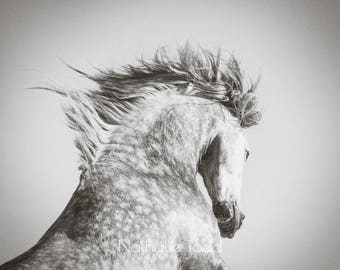 Horse photography, sepia horse photography, fine art horse photography, horse rearing, wall art