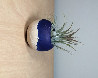 Air Plant Pod - dark blue