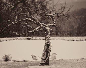 Dance, 8x10 black & white fine art photograph, nature