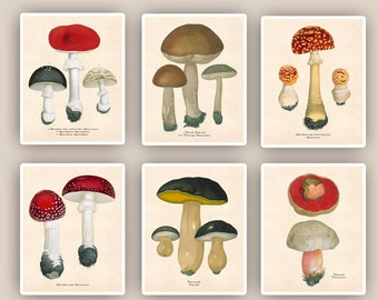 Mushroom print, Kitchen art, Mushroom art, 6 fungi prints, botanicals, mushroom school decor, educational posters, kids room decor