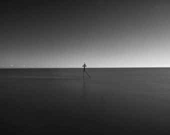 Gull -  fine art monochrome photography