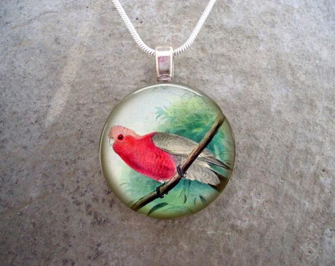 Bird Jewelry - Glass Pendant Necklace - Victorian Bird 47