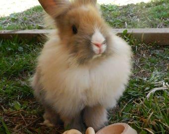 Bored Bunny Rabbit Toy Gift Set