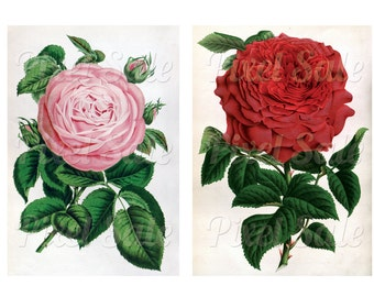 ROSES instant download, wedding clipart, digital flowers, pink red JPG digital download no.012