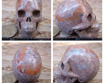 """1.98"""" 3.1oz 88.1g Fossil Skull Realistic Crystal Healing Magical Magick Metaphysical Mystic Reiki Wicca Altar Large 2 inch Brown SK2096"""