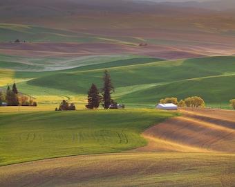 Kamiak Hills (Kamiak Butte, The Palouse, Washington)
