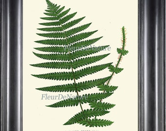 Botanical Fern Print Wall Art 11 Antique Beautiful Green Ferns Forest Plant Spring Summer Botany Chart Nature to Frame Home Wall Decor