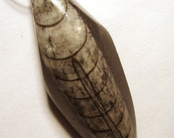 Orthoceras Fossil bead Pendant - Really Different and Cool - Sea Creature