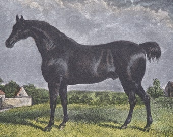 """19th Century Equine Hand Coloured Engraving Print """"CONFIDENCE"""" 1859 H.P Baker, J.H Engleheart Published by Rogerson and Tuxford"""