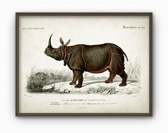 Rhinoceros Antique Illustration Wall Art Poster - Vintage Rhino Animal Home Decor - Rhinoceros Wall Art Print (B150)