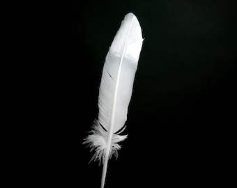"""Silver Dipped Very Large Turkey Feathers 10-12"""" - Hand painted - Great for weddings, birthdays, crafts, DIY decorations + dreamcatchers"""