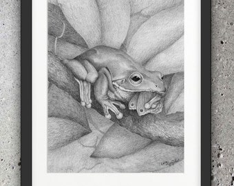Green Tree Frog #2 - Graphite Drawing