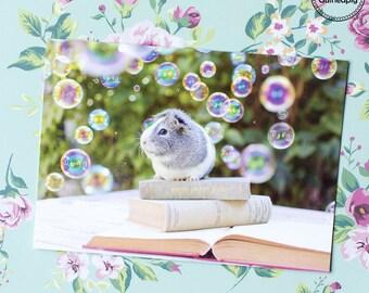Mieps guinea pig bubble postcard (5 cards)