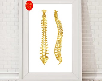 Spine Anatomy Physical therapy gifts anatomy art  physiotherapy Gold Foil Print  Gold Wall Art  Gold Mural Prints Vintage Foil