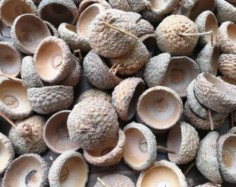100 Pcs Lovely Natural Acorn Caps For Your Crafts, CK-004