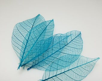 Lagoon blue skeleton leaves, small rubber tree leaf skeletons, hand dyed dried leaves
