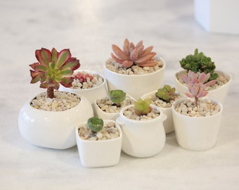 White ceramic succulent mini planter