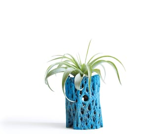 Air Plant Holder, Colorful Plant Gift, House Plants, Cholla Air Planter, Blue Plant Pots, Housewarming Gifts, Dorm Gifts, Gifts for Boys