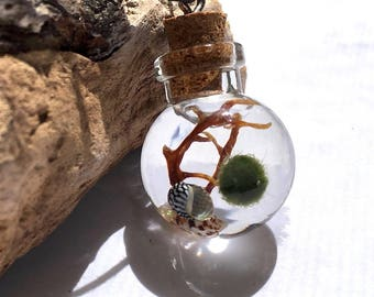 Terrarium Necklace Live Marimo Moss Ball Ecosphere Orb Terrarium Jewelry