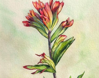Indian Paintbrush Delight ORIGINAL watercolor painting 8x10 wildflowers red flower nature outdoor bloom Montana by Christy Sheeler