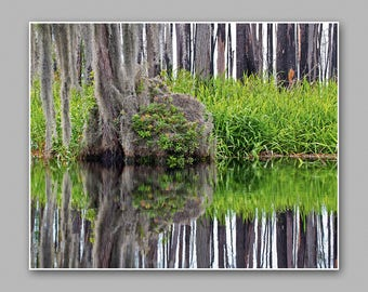 "A Reflection of Cypress Trees on the Okefenokee.  8""x10"" Nature/Swamp Photography Print."