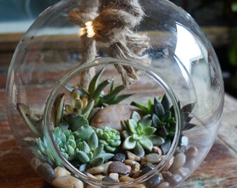 Large Glass Globe Succulent Terrarium Garden