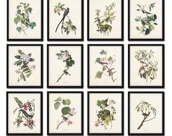 Audubon Birds Print Set No. 25, Botanical Prints, Illustration, Collage, Large Art Prints, Giclee, Art, Prints, Posters, Bird Prints,Audubon
