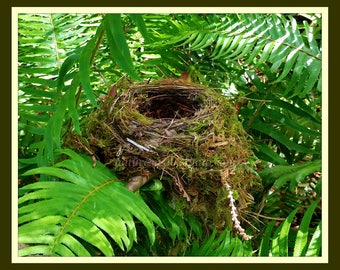 Nest In Plain Sight, A Fine Art Photograph of Wild Bird Nest Hidden Among Ferns Along The Trail