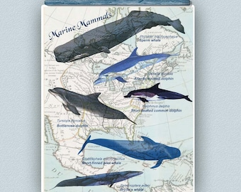 Marine mammals print, whale art, whales poster, dolphin, Map art, educational decorative poster, natural history, marine biology 11x14