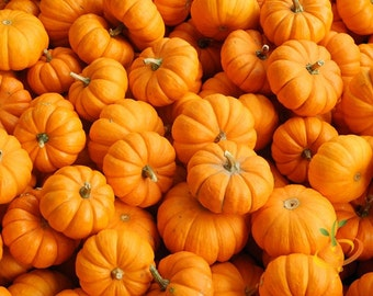 Pumpkin Jack Be Little, Small, Kid Sized, 20 Seeds