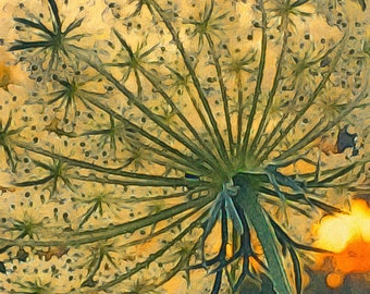 Queen Anne's Lace Plant Botanical Flower Floral Bloom Abstract Impressionist Illustration Print Giclée Wall Hanging Decor Poster Fine Art