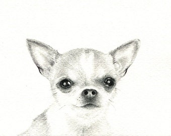 """Chihuahua art print of a drawing available 5x7"""" or 8x10"""""""
